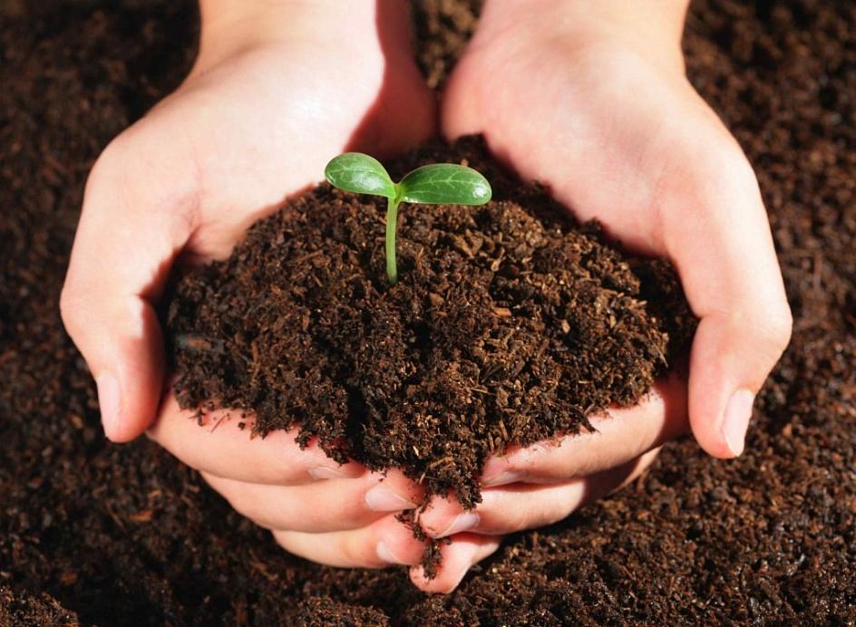применение для травянистых растений